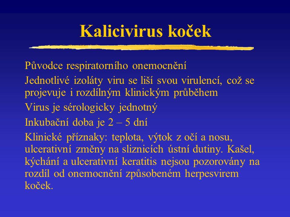 Kalicivirus koček Původce respiratorního onemocnění Jednotlivé izoláty viru se liší svou virulencí, což se projevuje i rozdílným klinickým průběhem Vi