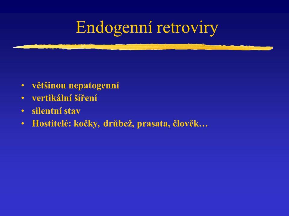 Vznik RD 114 endogenního retroviru koček