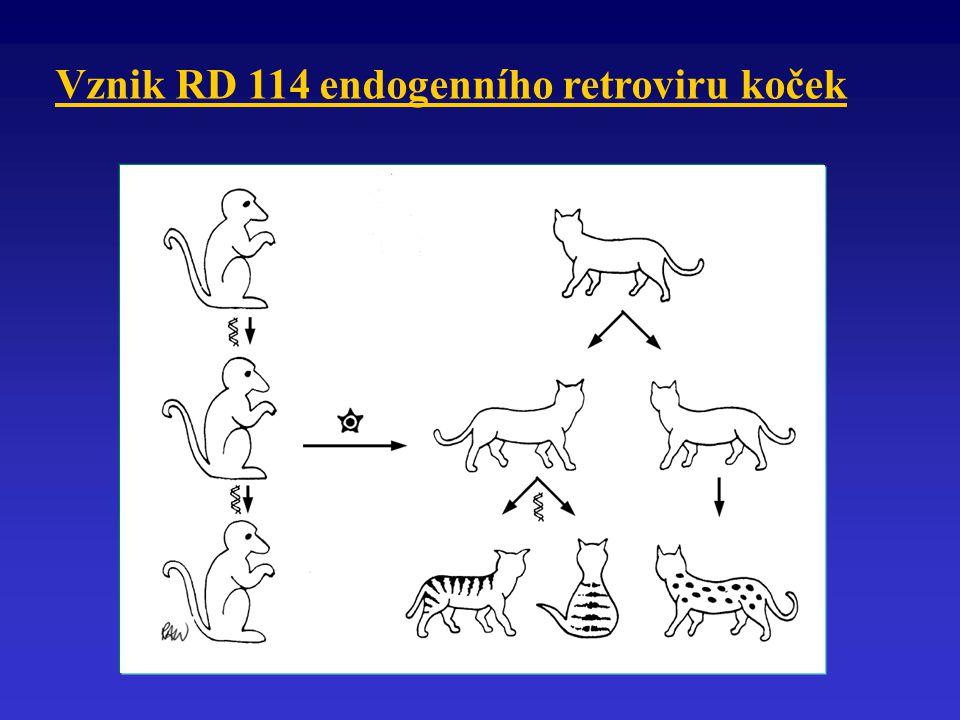Orthomyxoviridae Obalené viry Velikost virové partikule 80 - 120 nm Pleomorfní tvar, helikální symetrie kapsidy Genom tvoří 7 - 8 fragmentů (-)ssRNA Antigenní variabilita Rody: Influenzavirus A, B, C