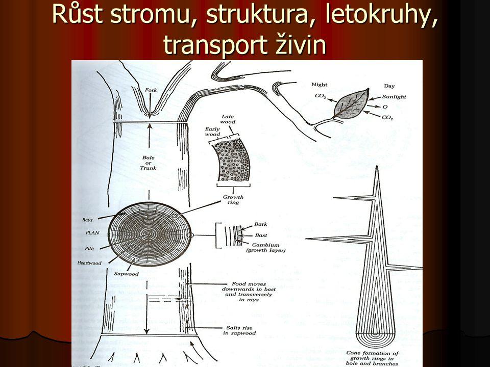 Růst stromu, struktura, letokruhy, transport živin