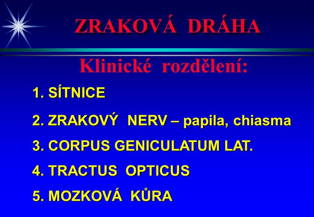 1. SÍTNICE 2. ZRAKOVÝ NERV – papila, chiasma 3. CORPUS GENICULATUM LAT. 4. TRACTUS OPTICUS 5. MOZKOVÁ KŮRA Klinické rozdělení: