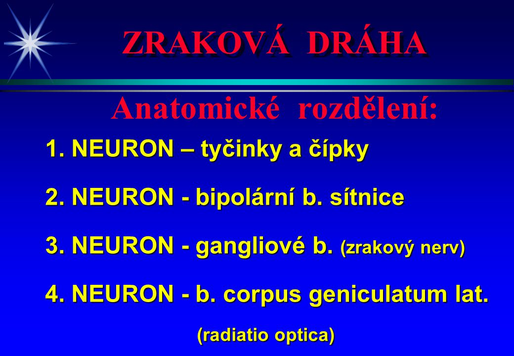 ZRAKOVÁ DRÁHA 1. NEURON – tyčinky a čípky 2. NEURON - bipolární b. sítnice 3. NEURON - gangliové b. (zrakový nerv) 4. NEURON - b. corpus geniculatum l
