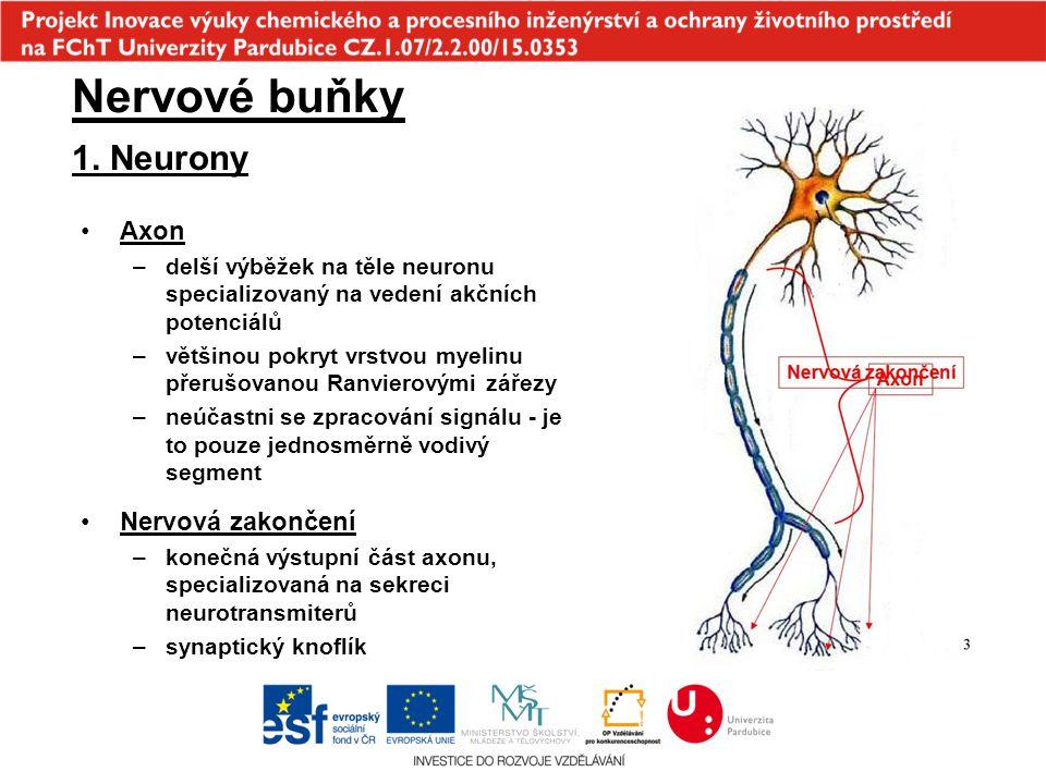 1. Neurony Nervové buňky Axon –delší výběžek na těle neuronu specializovaný na vedení akčních potenciálů –většinou pokryt vrstvou myelinu přerušovanou