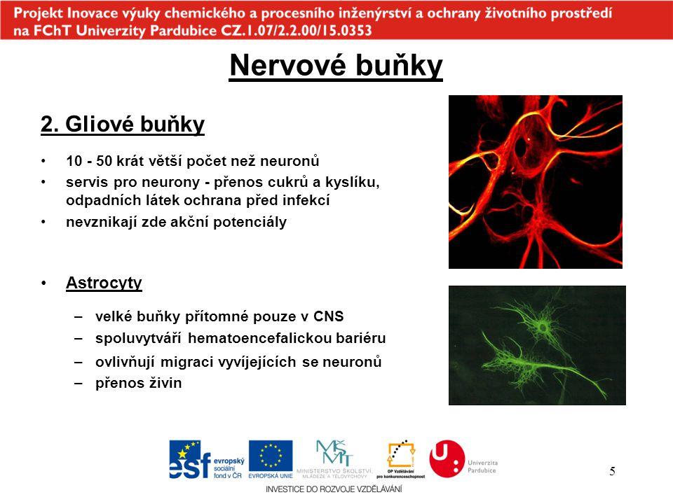 5 Astrocyty –velké buňky přítomné pouze v CNS –spoluvytváří hematoencefalickou bariéru Nervové buňky 2. Gliové buňky 10 - 50 krát větší počet než neur