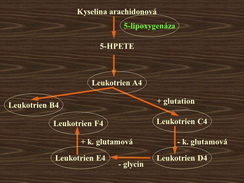 Kyselina arachidonová 5-HPETE Leukotrien A4 Leukotrien C4 Leukotrien D4Leukotrien E4 Leukotrien F4 5-lipoxygenáza + glutation - k.
