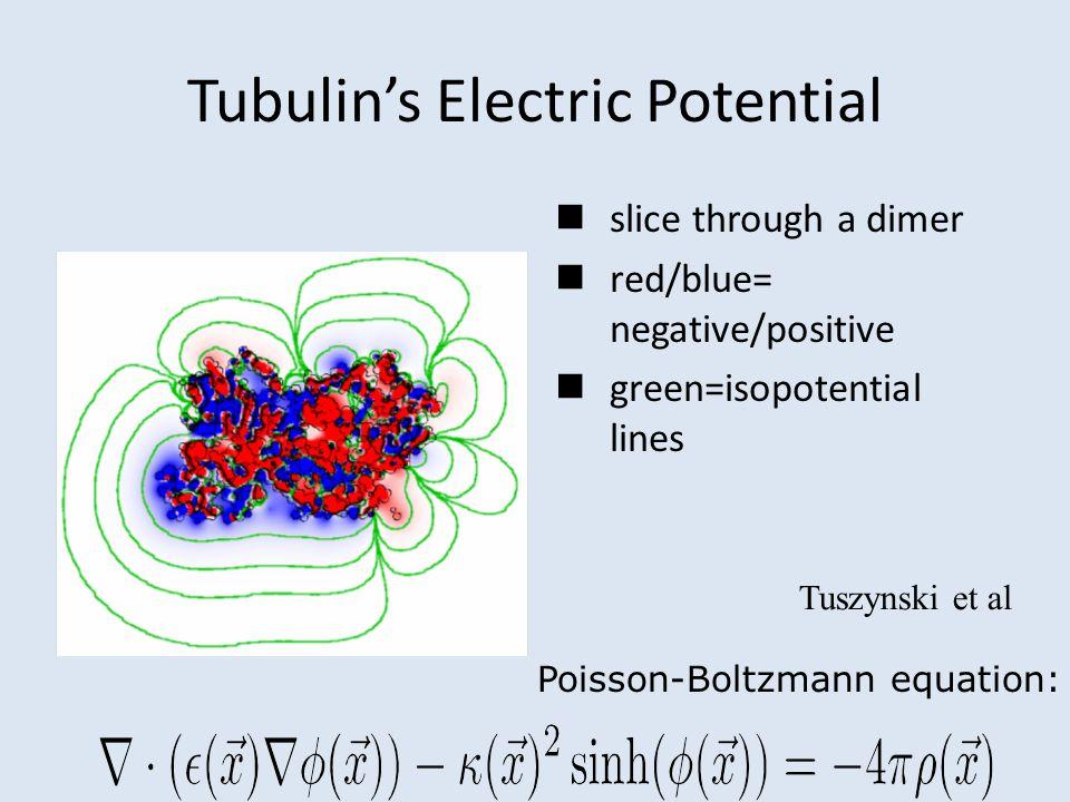 Tubulin's Electric Potential slice through a dimer red/blue= negative/positive green=isopotential lines Poisson-Boltzmann equation: Tuszynski et al