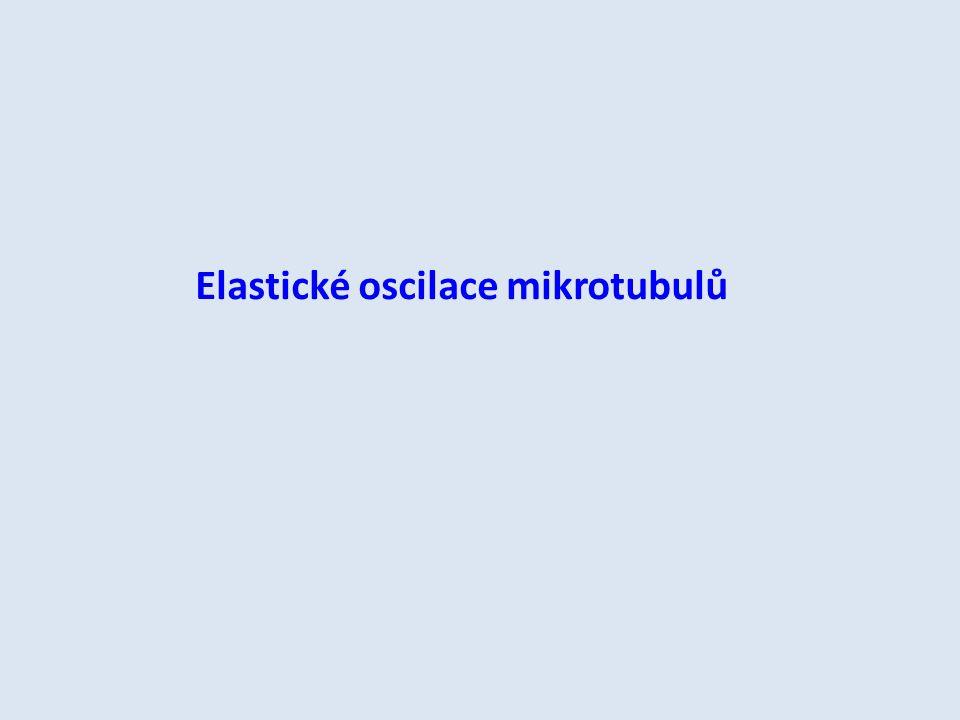 Elastické oscilace mikrotubulů