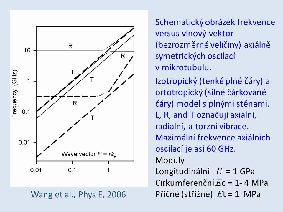 Schematický obrázek frekvence versus vlnový vektor (bezrozměrné veličiny) axiálně symetrických oscilací v mikrotubulu. Izotropický (tenké plné čáry) a