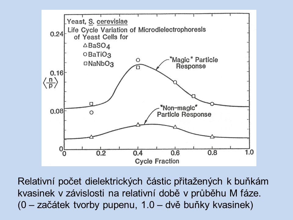 Relativní počet dielektrických částic přitažených k buňkám kvasinek v závislosti na relativní době v průběhu M fáze. (0 – začátek tvorby pupenu, 1.0 –