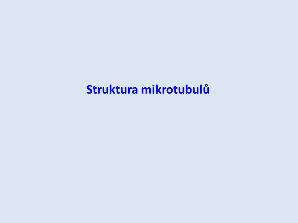 Rezonanční obvody mikrotubulů H.