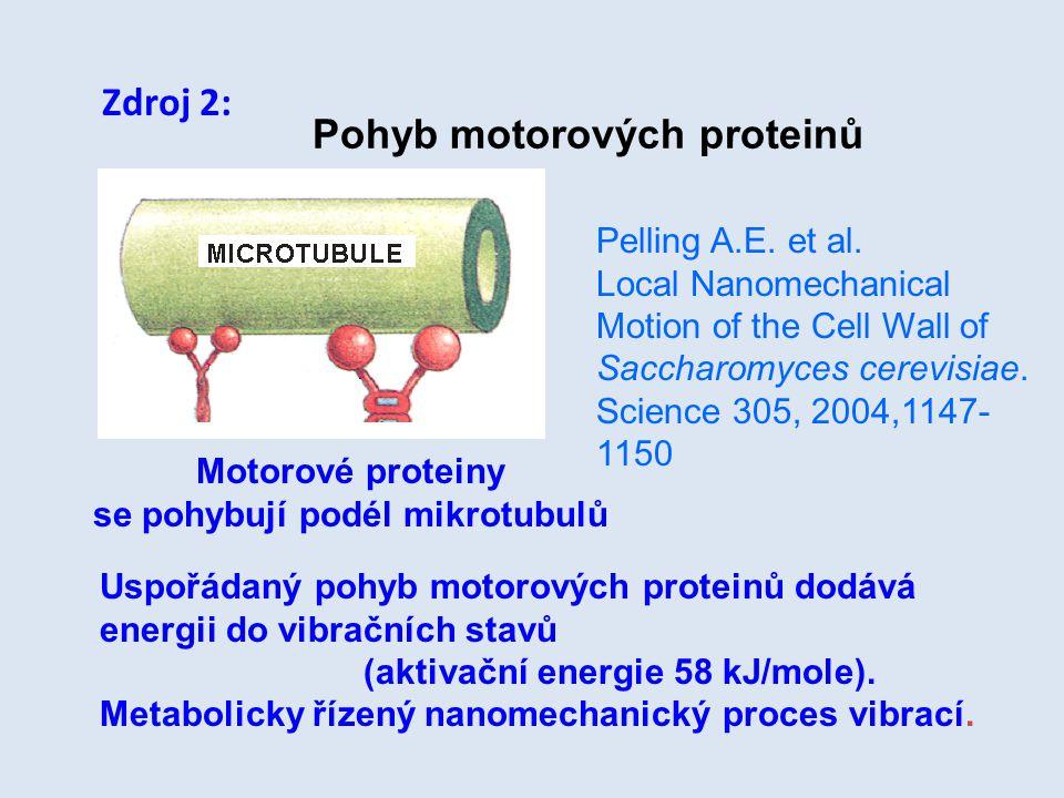 Motorové proteiny se pohybují podél mikrotubulů Uspořádaný pohyb motorových proteinů dodává energii do vibračních stavů (aktivační energie 58 kJ/mole)