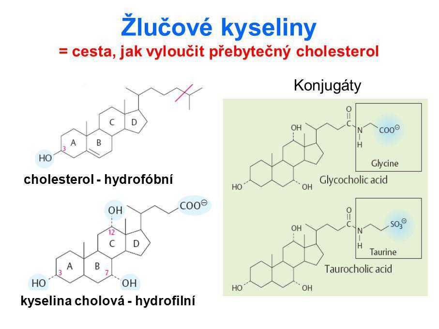 Žlučové kyseliny = cesta, jak vyloučit přebytečný cholesterol cholesterol - hydrofóbní kyselina cholová - hydrofilní Konjugáty