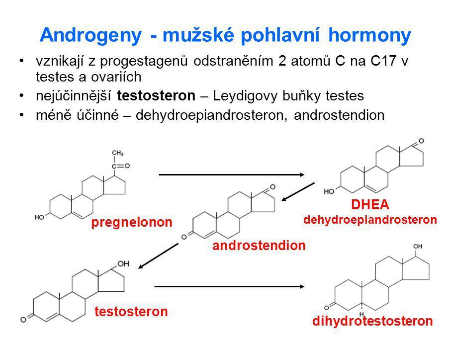 Androgeny - mužské pohlavní hormony vznikají z progestagenů odstraněním 2 atomů C na C17 v testes a ovariích nejúčinnější testosteron – Leydigovy buňk