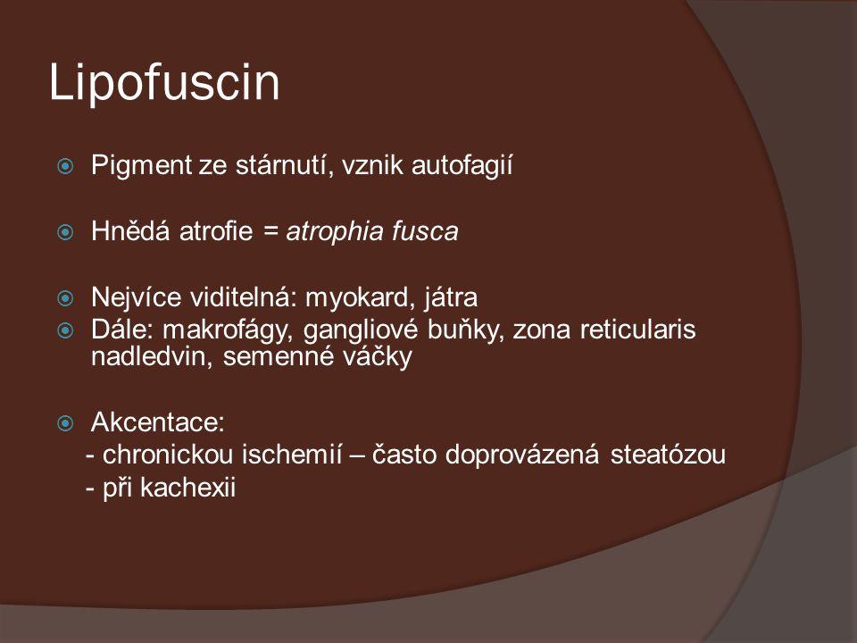 Lipofuscin  Pigment ze stárnutí, vznik autofagií  Hnědá atrofie = atrophia fusca  Nejvíce viditelná: myokard, játra  Dále: makrofágy, gangliové bu