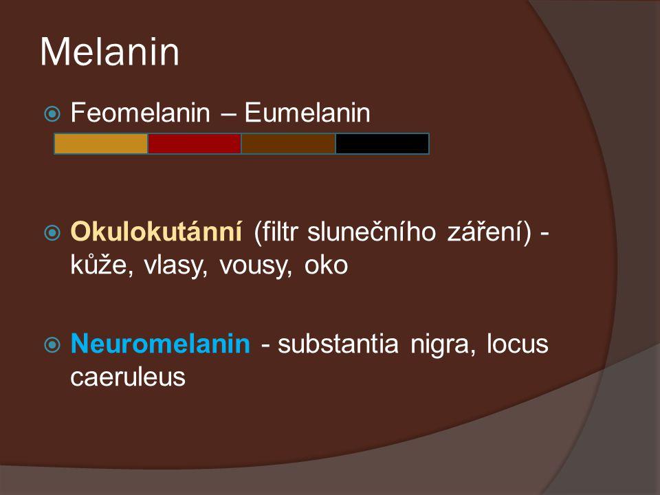 Melanin  Feomelanin – Eumelanin  Okulokutánní (filtr slunečního záření) - kůže, vlasy, vousy, oko  Neuromelanin - substantia nigra, locus caeruleus