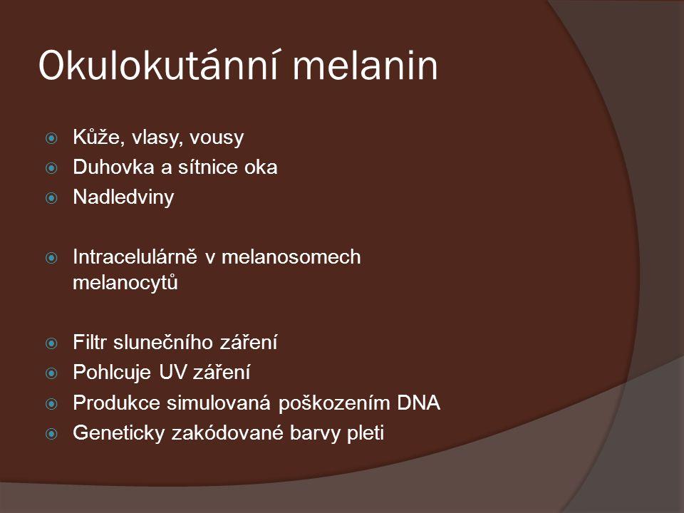 Okulokutánní melanin  Kůže, vlasy, vousy  Duhovka a sítnice oka  Nadledviny  Intracelulárně v melanosomech melanocytů  Filtr slunečního záření 