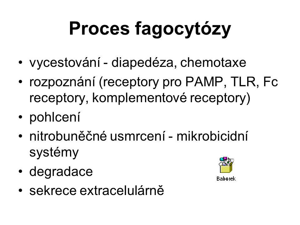 Proces fagocytózy vycestování - diapedéza, chemotaxe rozpoznání (receptory pro PAMP, TLR, Fc receptory, komplementové receptory) pohlcení nitrobuněčné