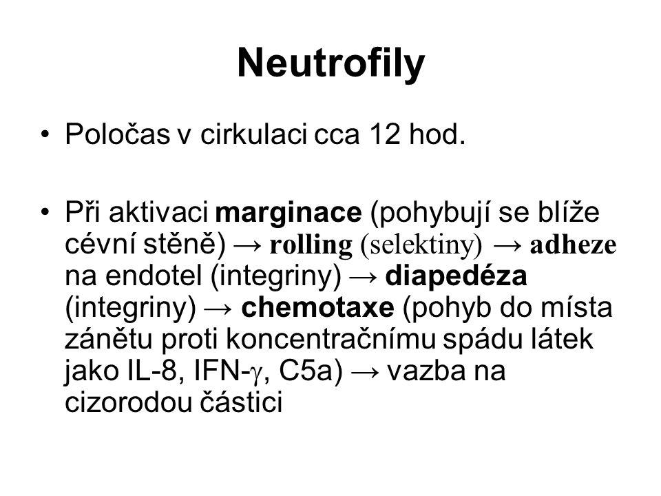 Neutrofily Poločas v cirkulaci cca 12 hod. Při aktivaci marginace (pohybují se blíže cévní stěně) → rolling (selektiny) → adheze na endotel (integriny