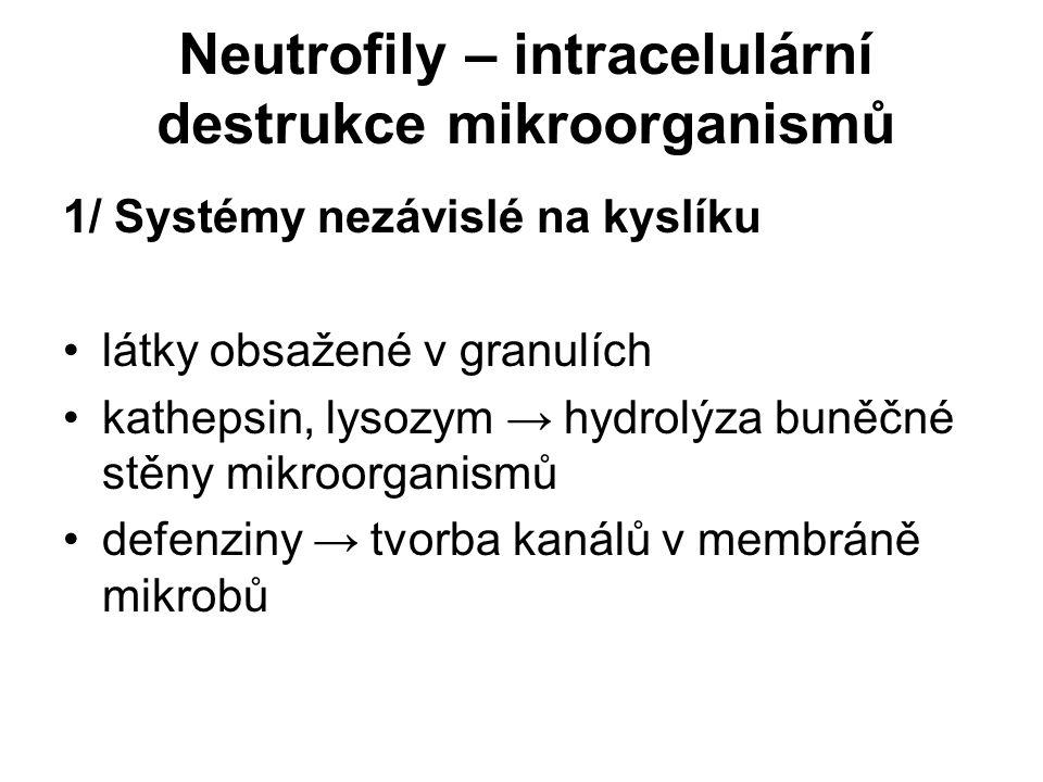 Neutrofily – intracelulární destrukce mikroorganismů 1/ Systémy nezávislé na kyslíku látky obsažené v granulích kathepsin, lysozym → hydrolýza buněčné