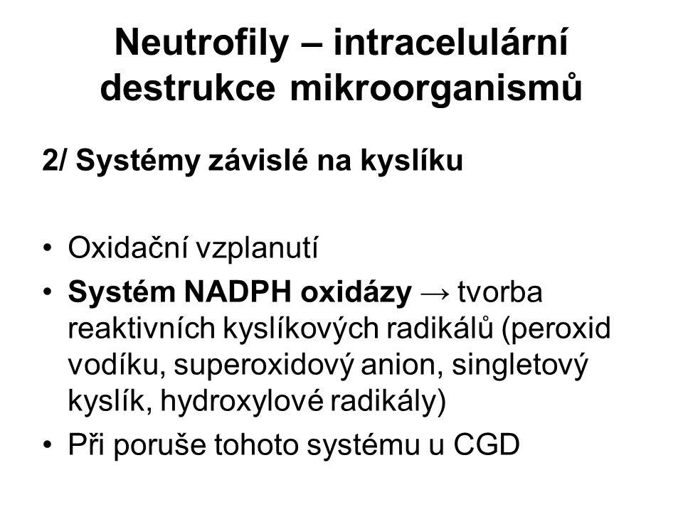 Neutrofily – intracelulární destrukce mikroorganismů 2/ Systémy závislé na kyslíku Oxidační vzplanutí Systém NADPH oxidázy → tvorba reaktivních kyslík