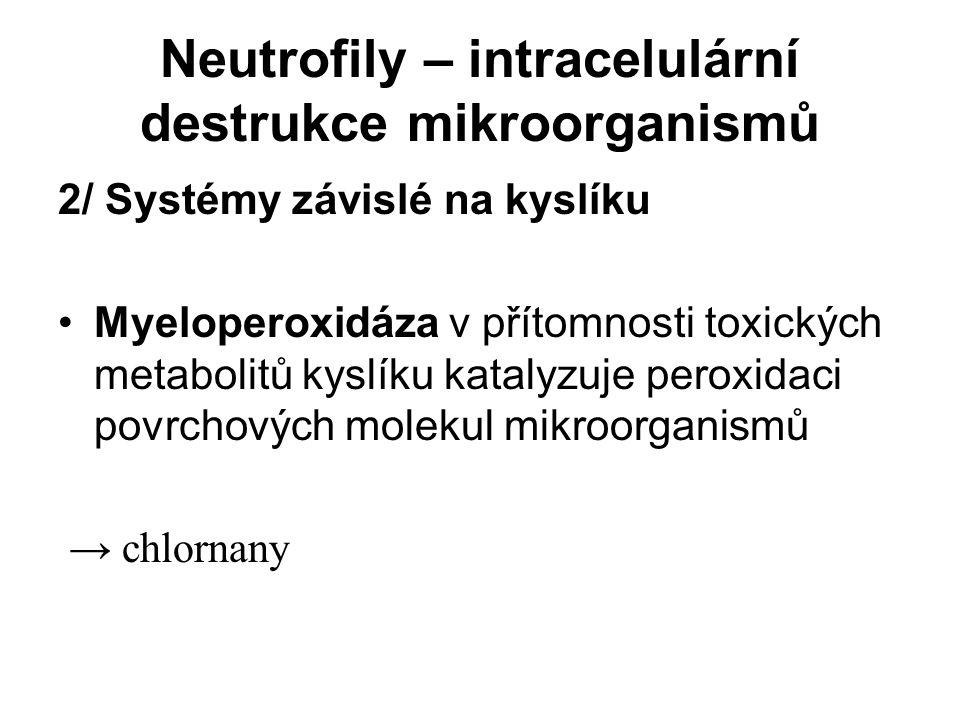 Neutrofily – intracelulární destrukce mikroorganismů 2/ Systémy závislé na kyslíku Myeloperoxidáza v přítomnosti toxických metabolitů kyslíku katalyzu