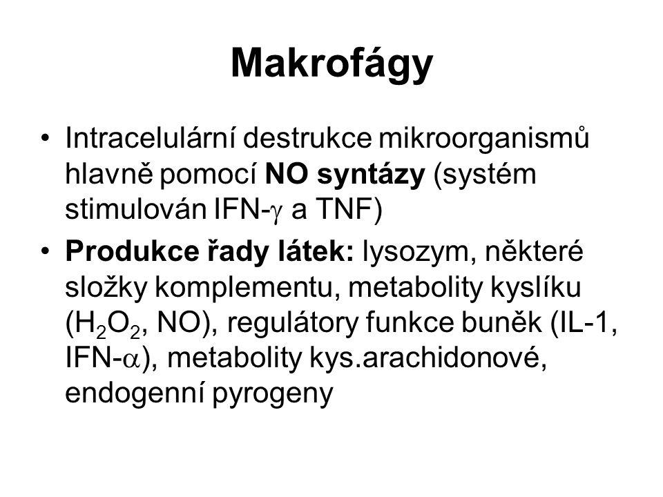 Makrofágy Intracelulární destrukce mikroorganismů hlavně pomocí NO syntázy (systém stimulován IFN-  a TNF) Produkce řady látek: lysozym, některé slož