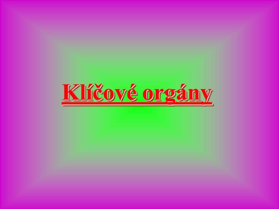 Klíčové orgány Klíčové orgány Klíčové orgány Klíčové orgány