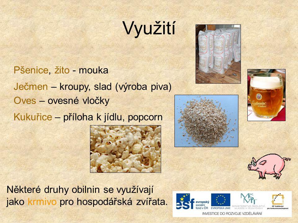 Využití Pšenice, žito - mouka Ječmen – kroupy, slad (výroba piva) Oves – ovesné vločky Kukuřice – příloha k jídlu, popcorn Některé druhy obilnin se vy
