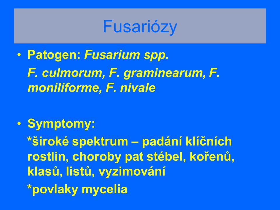 Fusariózy Patogen: Fusarium spp. F. culmorum, F. graminearum, F. moniliforme, F. nivale Symptomy: *široké spektrum – padání klíčních rostlin, choroby