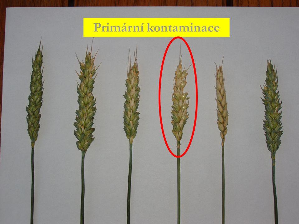 Research Institute for Fodder Crops, LtD. Troubsko Primární kontaminace