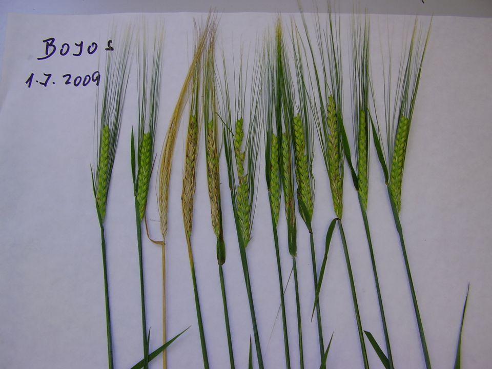Research Institute for Fodder Crops, LtD. Troubsko