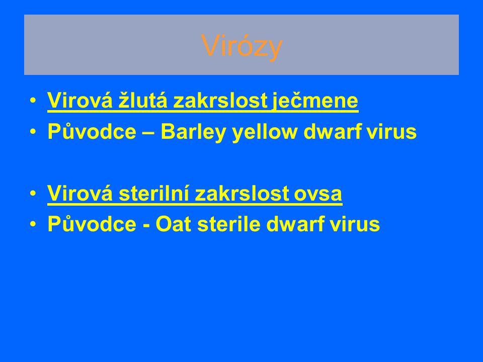 Patogen: Blumeria graminis (Erisyphe graminis) - obligátní parazit, variabilní, 60 hostitelských druhů Symptomy: *na všech částech rostlin *bělavé, našedlé kupky mycelia, splývají *nekrotizace *kleistothecia s přívěsky - vřecka Padlí pšenice