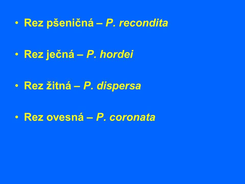 Rez pšeničná – P. recondita Rez ječná – P. hordei Rez žitná – P. dispersa Rez ovesná – P. coronata