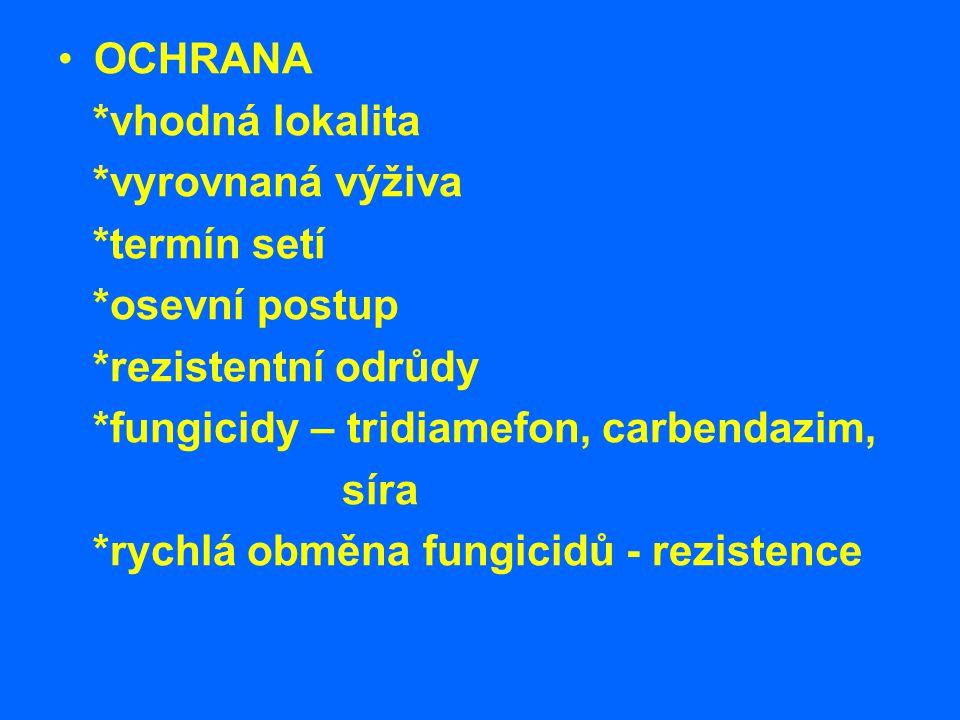 Námelovitost žita - paličkovice nachová Patogen: Claviceps purpurea *přes 200 hostitelů *žito Symptomy: *místo obilky sklerócia