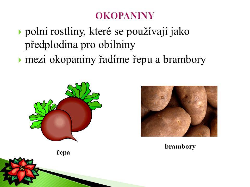  polní rostliny, které se používají jako předplodina pro obilniny  mezi okopaniny řadíme řepu a brambory řepa brambory