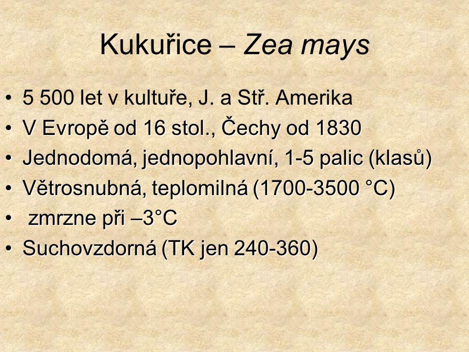 Kukuřice – Zea mays 5 500 let v kultuře, J.a Stř.