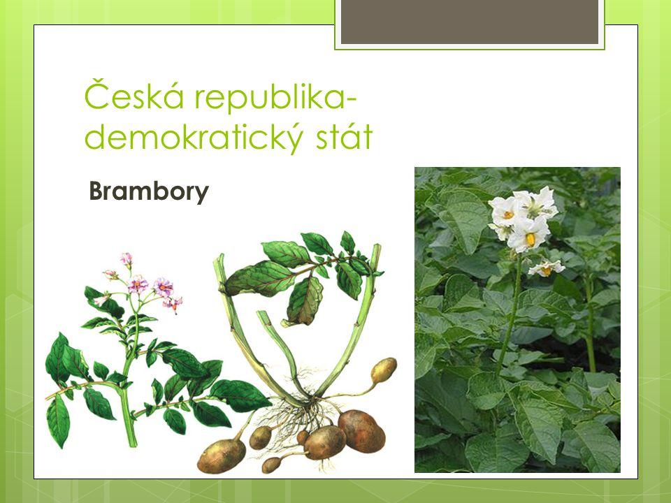 Česká republika- demokratický stát Brambory