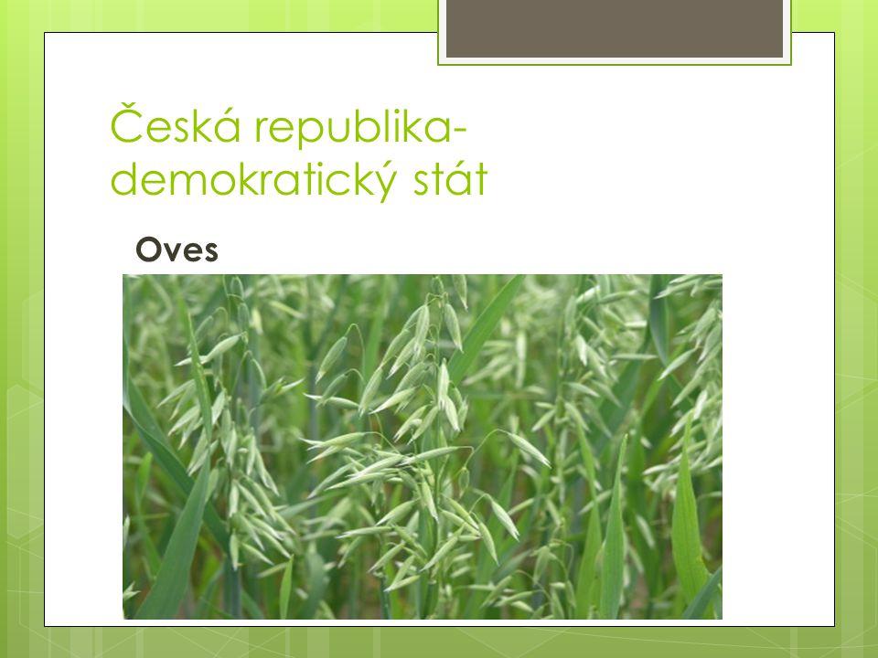 Česká republika- demokratický stát Oves