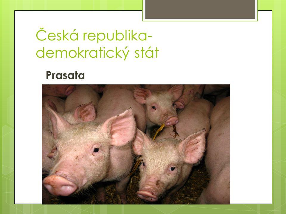 Česká republika- demokratický stát Prasata
