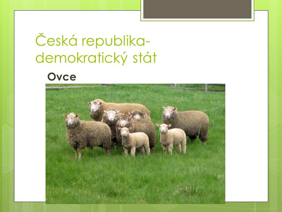 Česká republika- demokratický stát Ovce