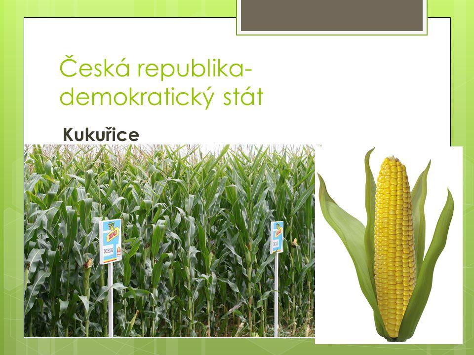 Česká republika- demokratický stát Kukuřice