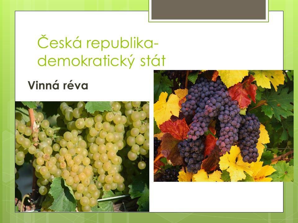 Česká republika- demokratický stát Vinná réva