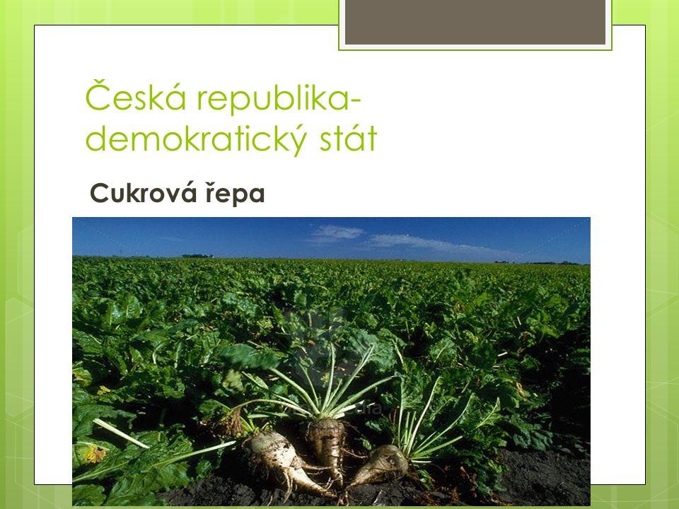Česká republika- demokratický stát Pšenice