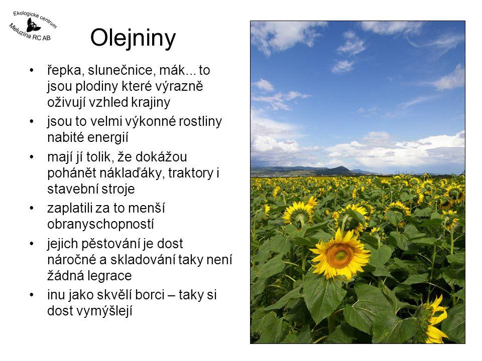 Olejniny řepka, slunečnice, mák... to jsou plodiny které výrazně oživují vzhled krajiny jsou to velmi výkonné rostliny nabité energií mají jí tolik, ž