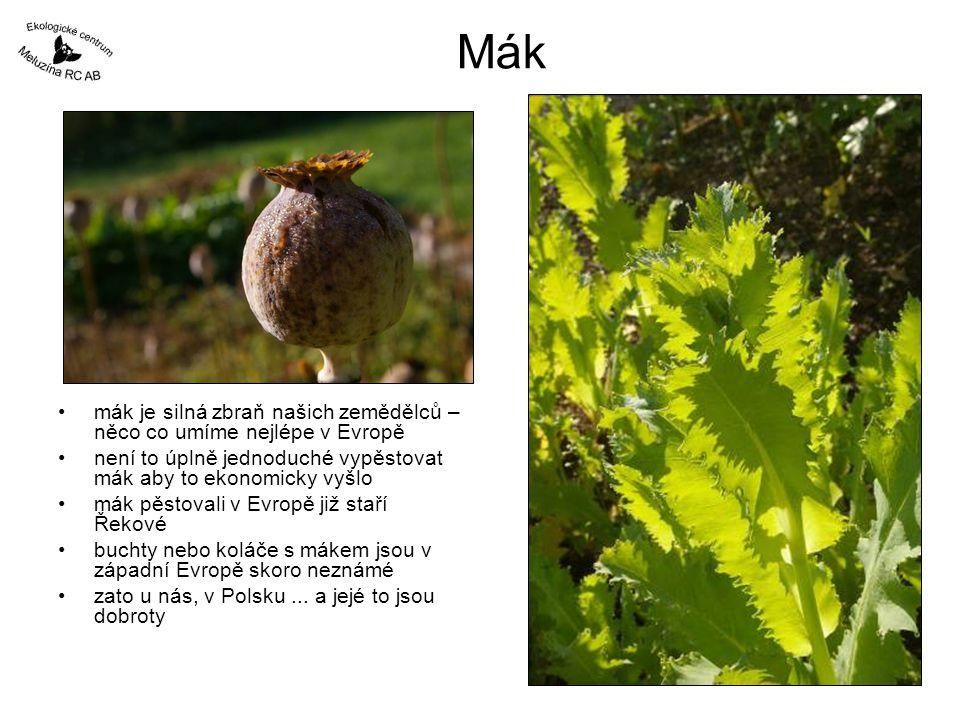 Mák mák je silná zbraň našich zemědělců – něco co umíme nejlépe v Evropě není to úplně jednoduché vypěstovat mák aby to ekonomicky vyšlo mák pěstovali