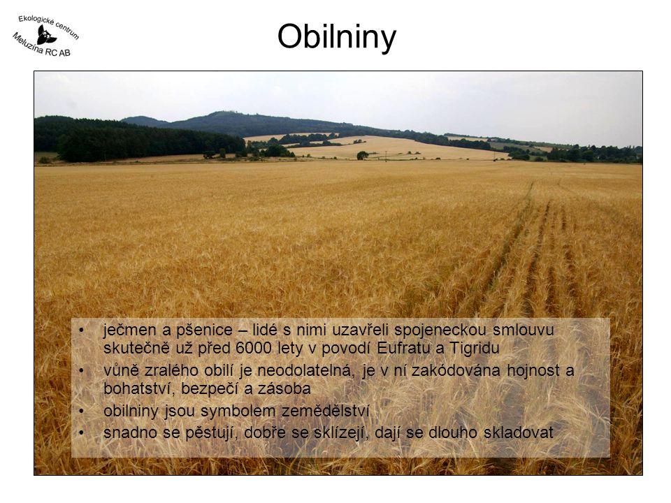Obilniny ječmen a pšenice – lidé s nimi uzavřeli spojeneckou smlouvu skutečně už před 6000 lety v povodí Eufratu a Tigridu vůně zralého obilí je neodo