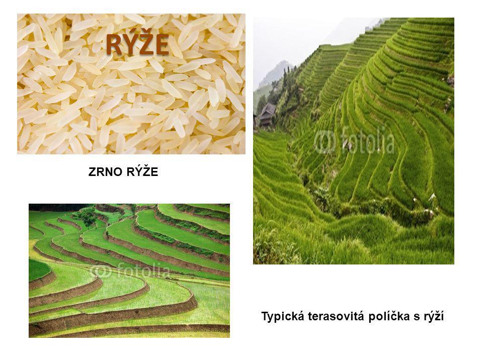 ZRNO RÝŽE Typická terasovitá políčka s rýží