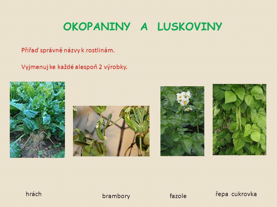 OKOPANINY A LUSKOVINY Přiřaď správně názvy k rostlinám. Vyjmenuj ke každé alespoň 2 výrobky. brambory řepa cukrovka fazole hrách