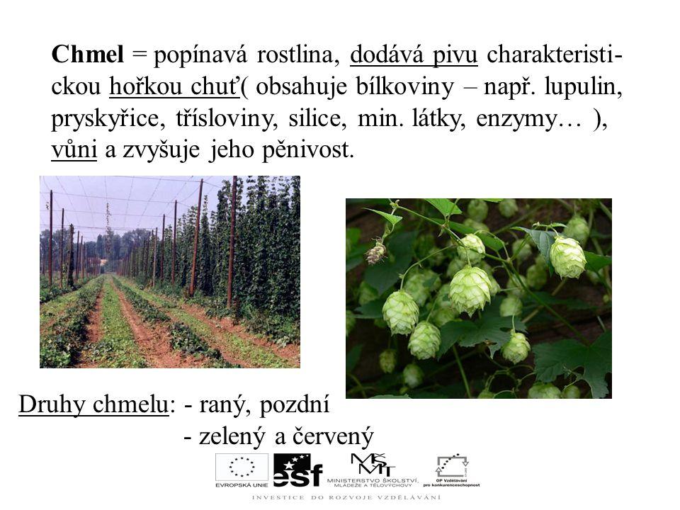 Chmel = popínavá rostlina, dodává pivu charakteristi- ckou hořkou chuť( obsahuje bílkoviny – např.