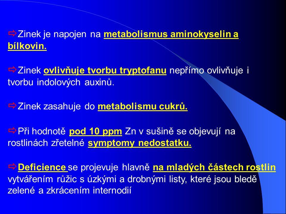  Zinek je napojen na metabolismus aminokyselin a bílkovin.  Zinek ovlivňuje tvorbu tryptofanu nepřímo ovlivňuje i tvorbu indolových auxinů.  Zinek